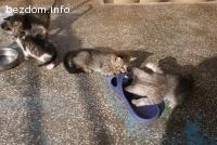 подарявам котета с хигиенни навици
