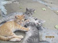 Подарявам котета - София