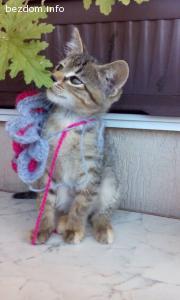 Осиновена!Подарявам красиво и мило женско бебе-котенце!