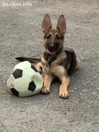 Подарявам куче на 7 месеца