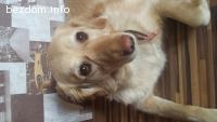 Подарявам куче СПЕШНО