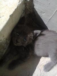 Подарявам малки котенца