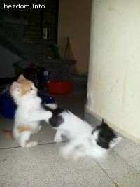 подарявам малки котета