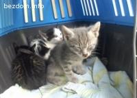 Подарявам малки сладки котенца
