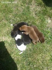 Подарявам шест малки кученца