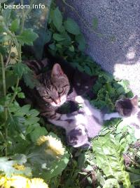 Подарявам три  котета - СПЕШНО !!!