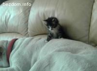 Подарявам три мъжки котета