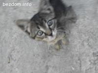 Подарявам женско коте