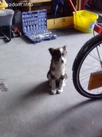 Подарявам женско куче на 3 месеца