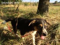 Подарявам женско куче- Тара, 4-5 месеца