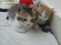 Подаряваме две котета, Лео и Пуфи.