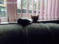 Подаряваме две сладки любвеобвилни котета