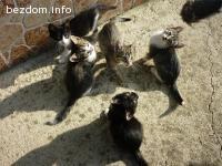 подаряваме пет котета