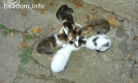 Подаряваме три от пет котенца,за две има кандадат