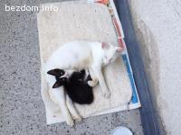 Подаряват се котета