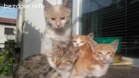 Котета търсят дом - СПЕШНО!!!