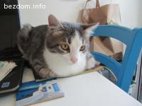 Прекрасен малък котак си търси постоянен дом-осиновен