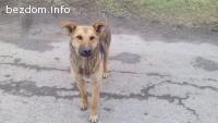 Прекрасен млад куч търси постоянен дом-осиновен!