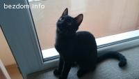 Прекрасната черна пантерка Самър търси дом!
