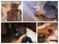 Прекрасни котета търсят дом-осиновени