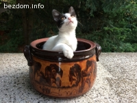 Прекрасно малко котенце търси своето ново семейство