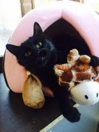 Прелестна пухкавелка търси нов дом-осиновена:)