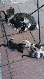 Шест малки пухчета търсят дом