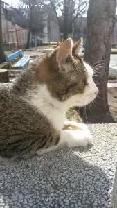 Шушко -най-прекрасното коте на света търсия своя човек!