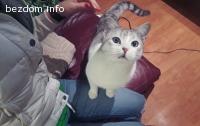 ОСИНОВЕНА -Сибирска Тортичка, БУРМИЛА микс, с ТЮРКОАЗЕНИ очи