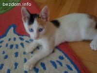 Синеоко котенце търси дом!