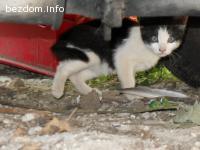 Осиновена! Сладка черно бяла беба-коте търси дом!