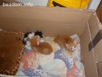 Сладки котенца от нашата Мишел