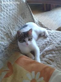Сладко котенце търси дом