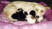 Спешна нужда от осиновители за мама и 10 бебета