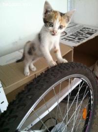 Спешна помощ за 5 малки котенца