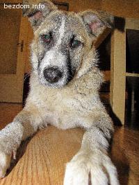 Спешно Подаряваме Шестмесечно Женско Куче