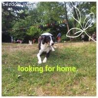 Търси и се дом !!!