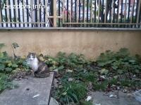 Търсим дом за котенцето Мишел