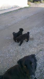 Търсим дом за тези 2 кученца !