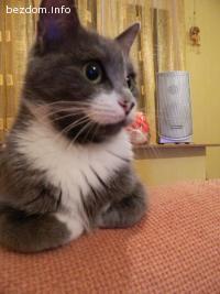 Търсим нов дом на моите прекрасни котенца