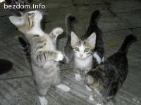 Търсим стопани за 5 котета, останали без майка