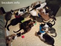 Търся дом за 26 котенца
