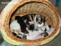 Търся съвестни стопани за тези котенца