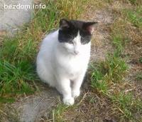 Томи, безкрайно любвеобилно коте търси дом!