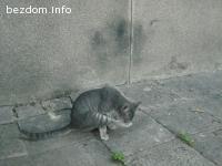 Три котета сирачета търсят домове