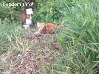 Три много красиви котенца търсят дом