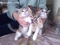 Три невероятно сладки котета търсят дом-осиновени:)