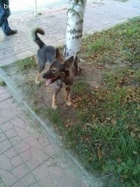 Забелязано е изгубено куче