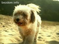 загубено куче