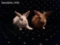 Зайчета търсят дом